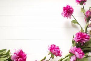 ピンクの花と白い壁